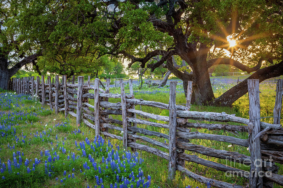 America Photograph - Texas Hill Country Fence by Inge Johnsson