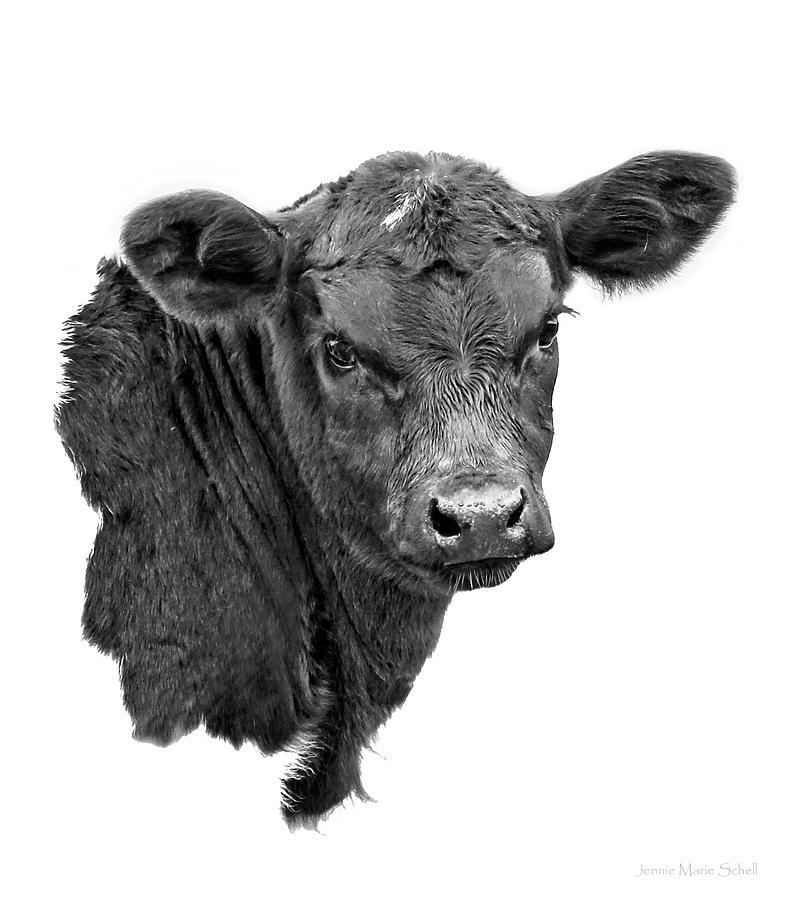 Texas Longhorn Calf Black And White Photograph