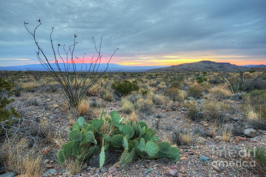 Desert Photograph - Texas Sunrise by Joe Sparks