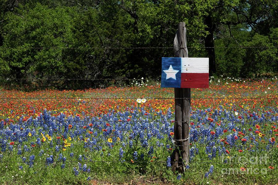 Texas Wildflowers by Paul Quinn