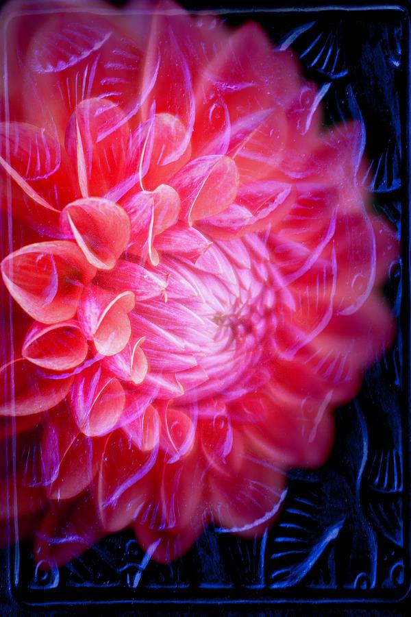 Dahlia Photograph - Textured Dahlia By Tl Wilson Photography by Teresa Wilson