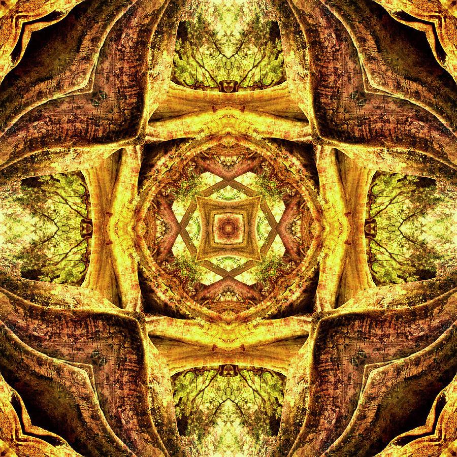 Textured Tree Mandala Photograph by Steve Satushek