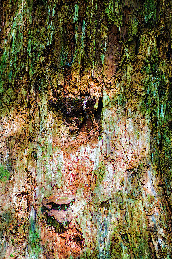 Texturized Mossy Tree Trunk by Tikvah's Hope
