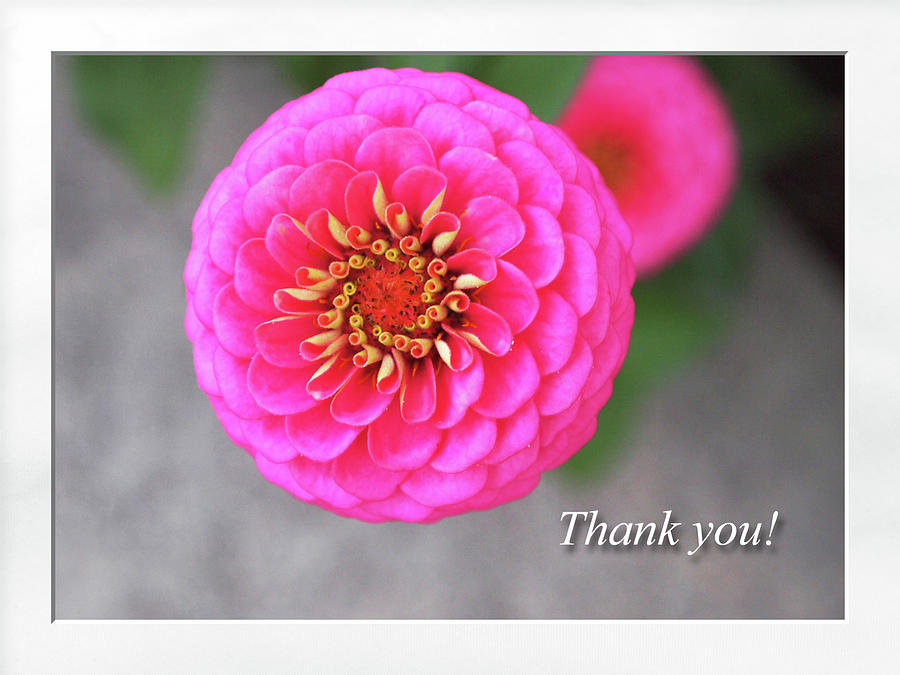 Thank You by Jacqueline Sleter