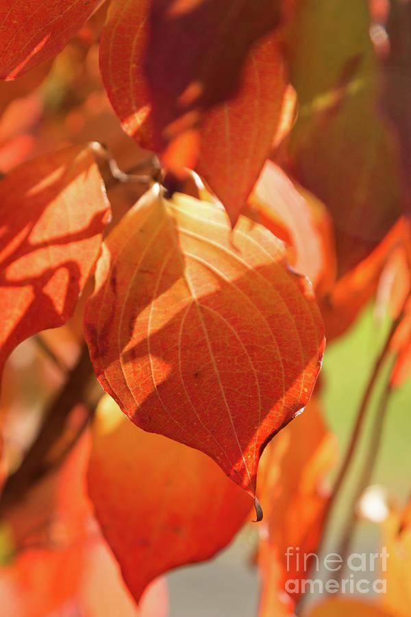 That Autumn Light by Ana V Ramirez
