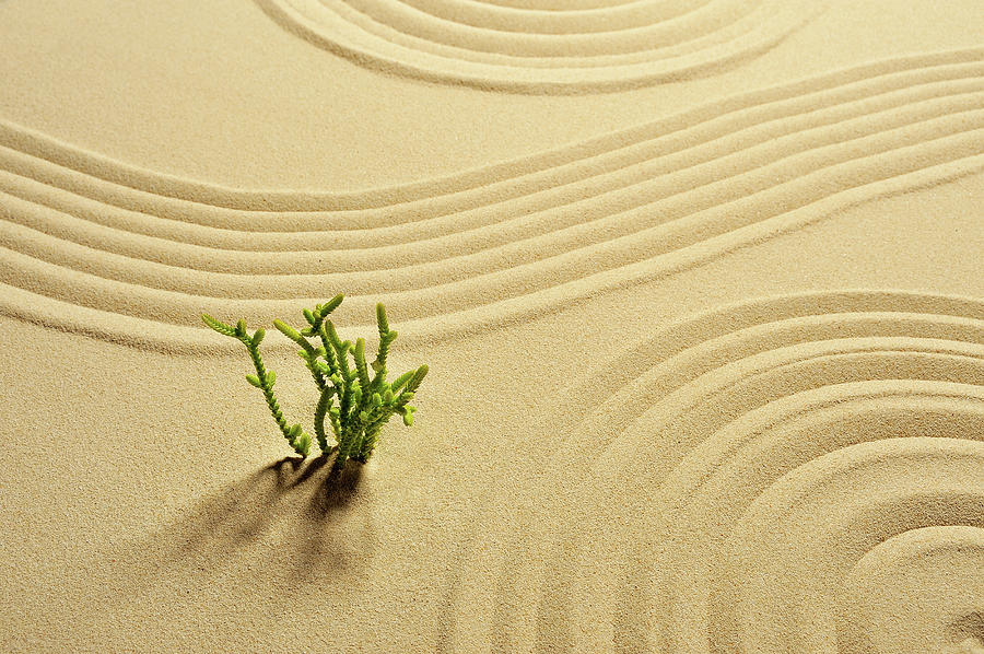 That Plant And Wave Pattern In The Sand Photograph by Yagi Studio