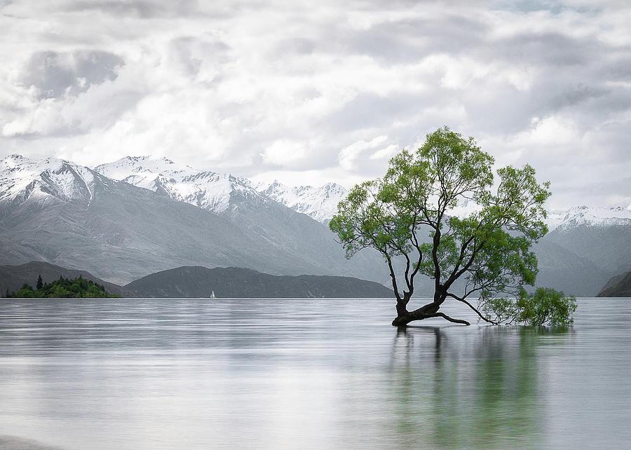 New Zealands Wanaka Tree On A Cloudy Day by Peter Kolejak