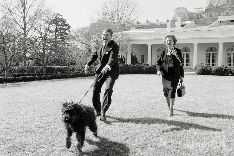 Thatcher And Reagan Walking Dog Photograph by Bettmann