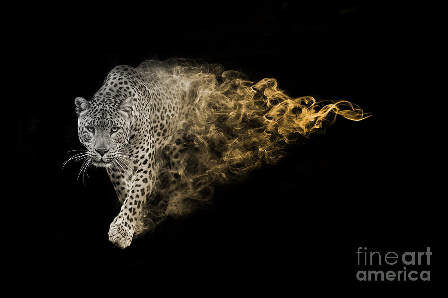Big Photograph - The African Leopard Is One Of The Big by Effect Of Darkness