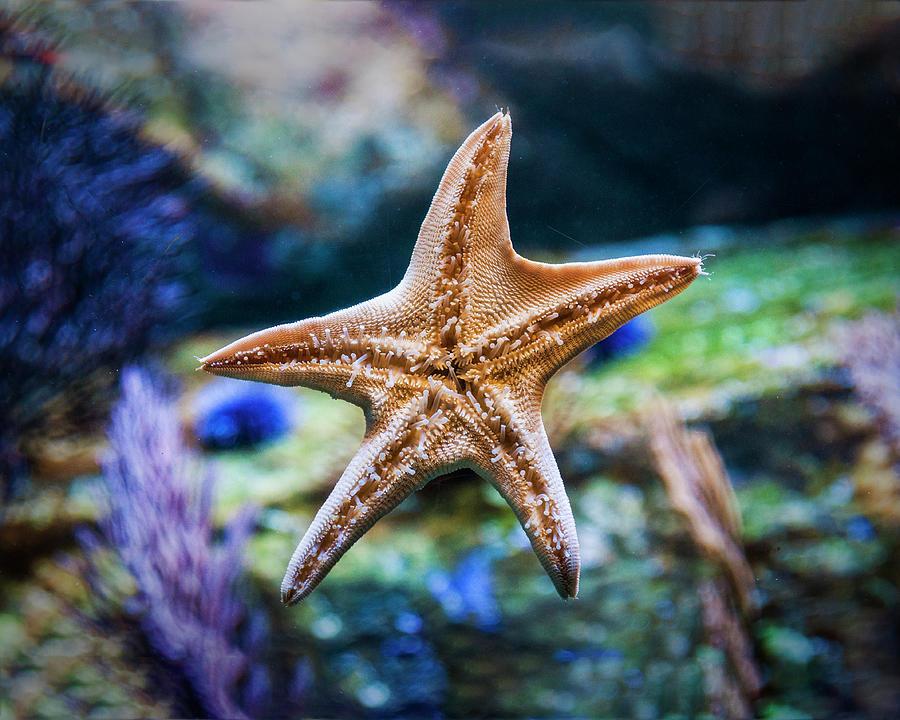 Sea Star Photograph - The Amazing Sea Star by Nazeem Sheik