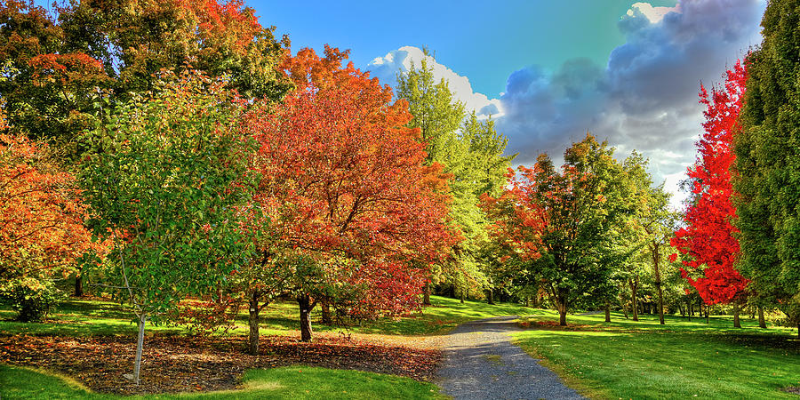 The Arboretum in Autumn by David Patterson