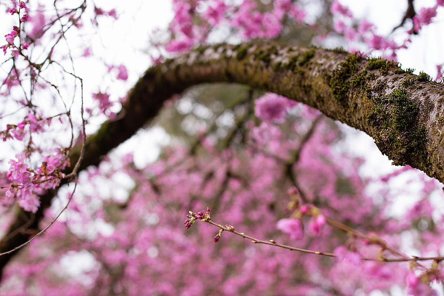 The arc of spring by Kunal Mehra