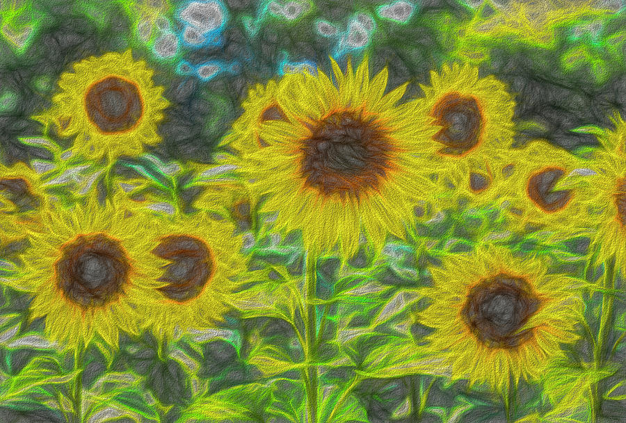 The Art Of The Sunflower Photograph
