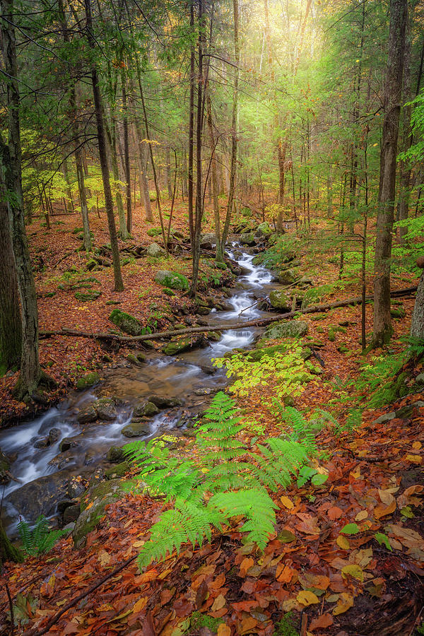 The Autumn Forest by Bill Wakeley