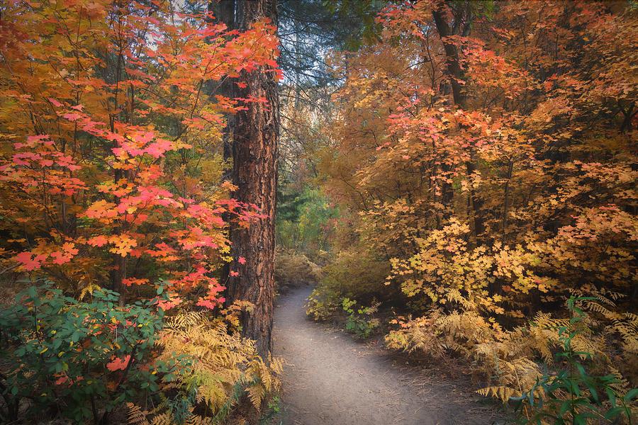 The Autumn Path  by Saija Lehtonen