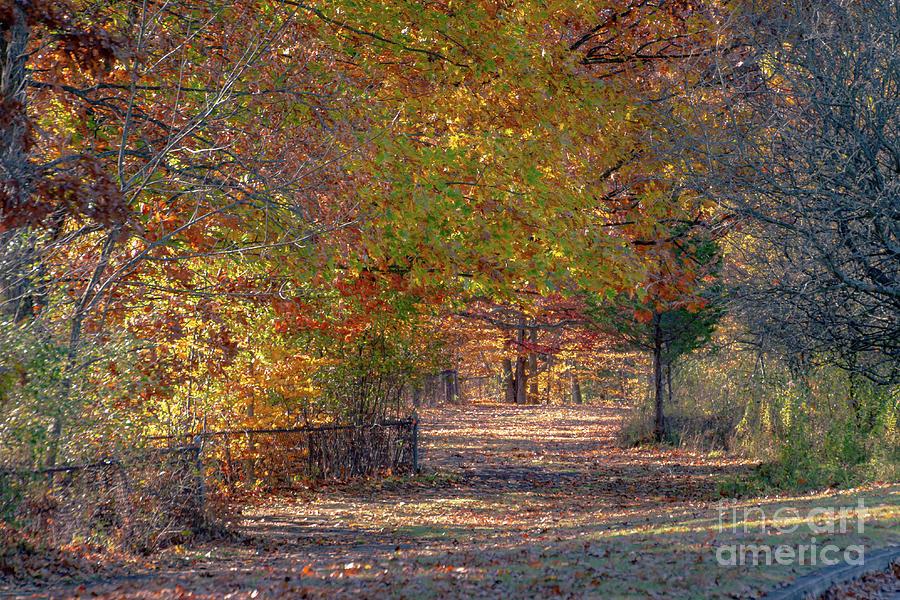 The Autumn Trail by William Norton