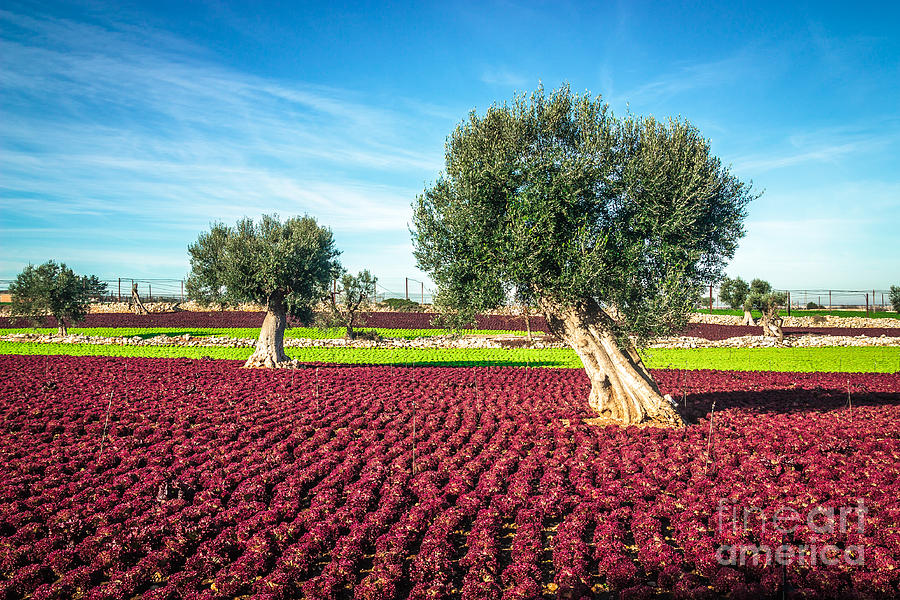 Landscapes Photograph - The Beautiful And Colorful Landscapes by Sabino Parente