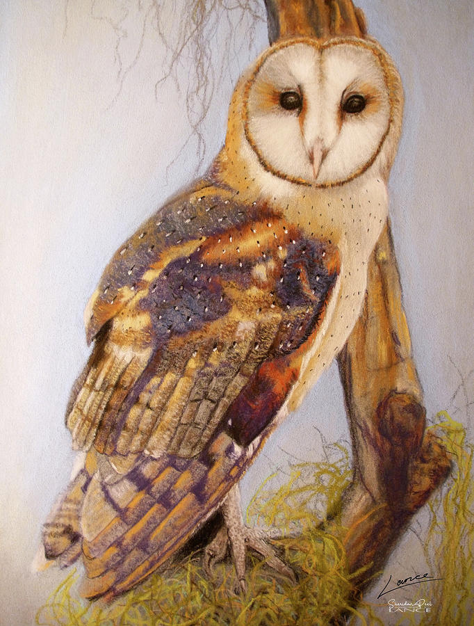The Beautiful Barn Owl by Lance Sheridan-Peel