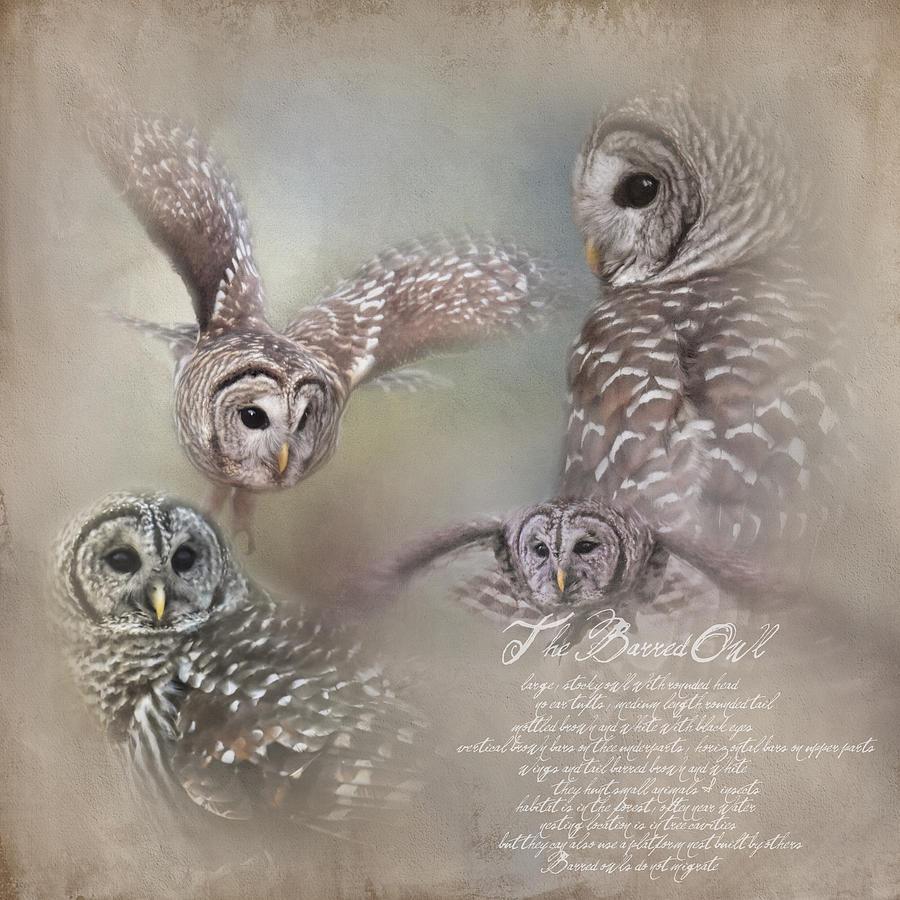The Beautiful Barred Owl Photograph By Jai Johnson
