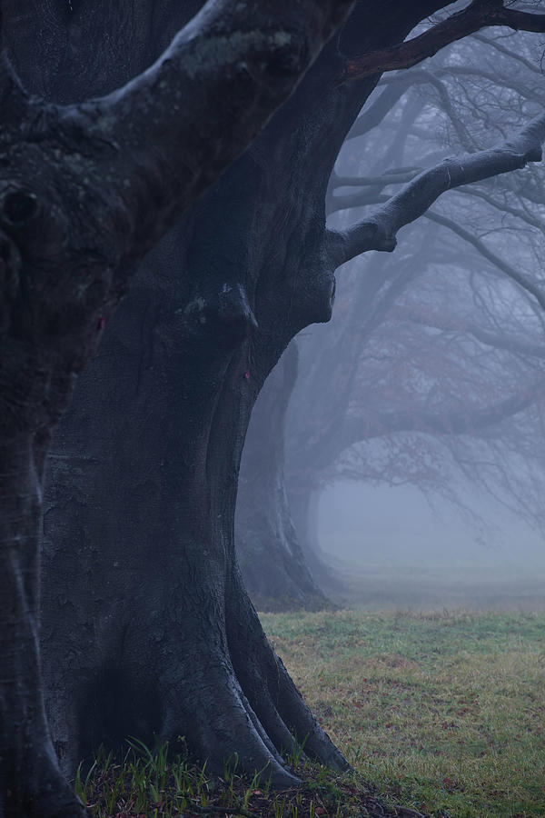 The Beech Avenue At Kingston Lacy Under Photograph by Julian Elliott Photography