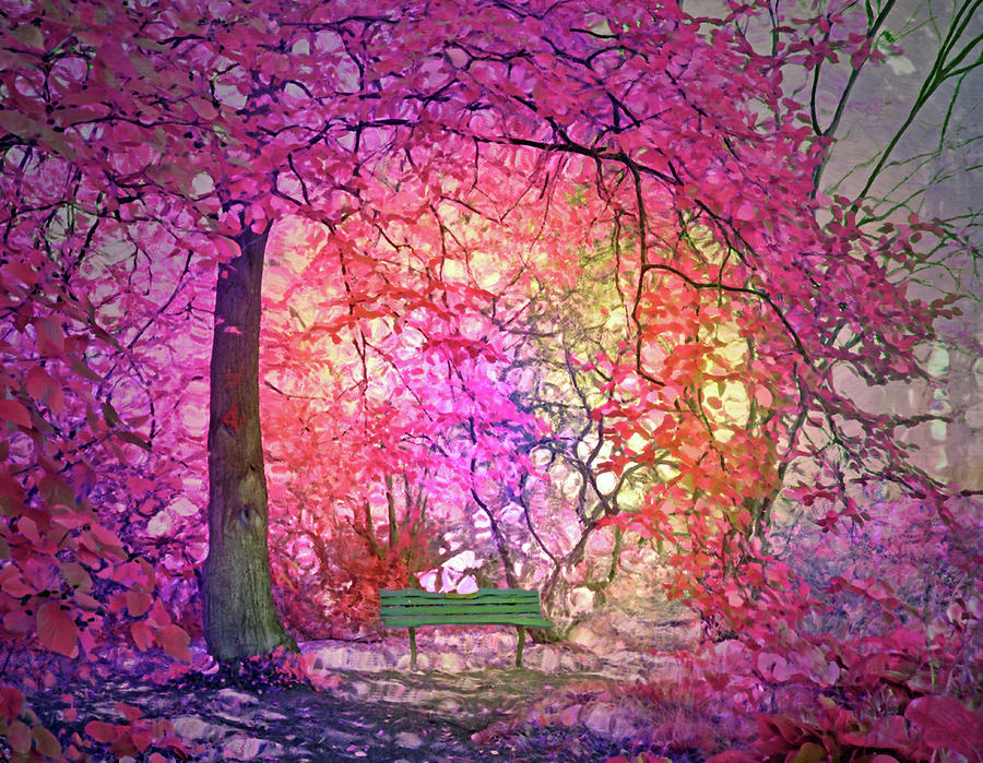 The Bench that Dreams Beneath the Pink Trees by Tara Turner