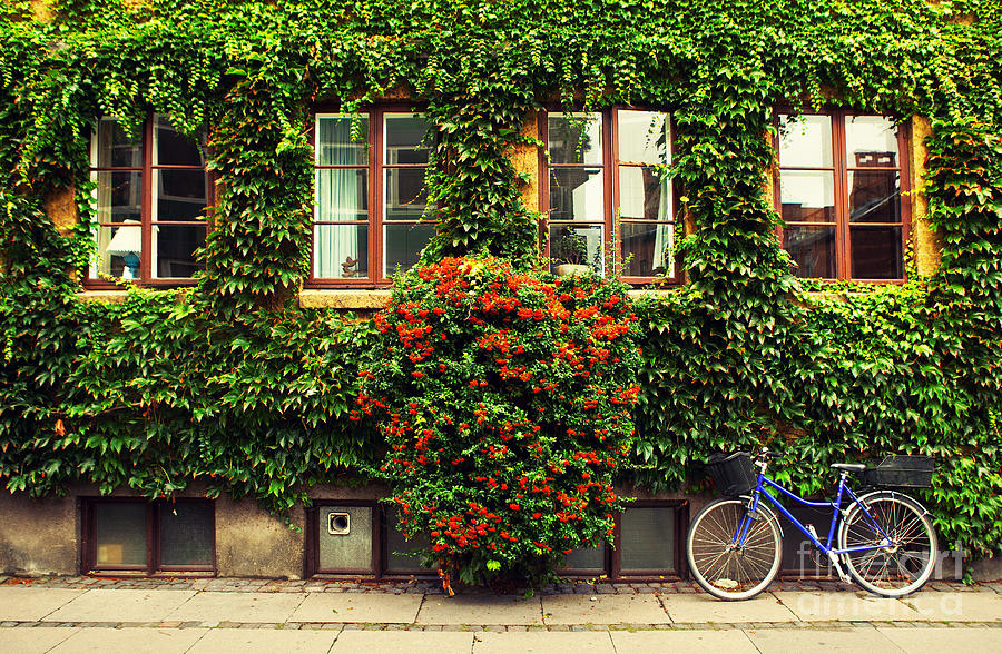 Bicycle Photograph - The Bicycle In Copenhagen by Oleg Podzorov