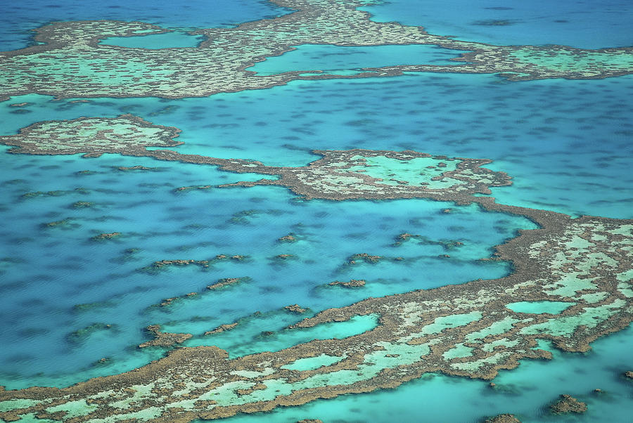The Big Reef, Whitsunday Islands Photograph by Chantal Ferraro