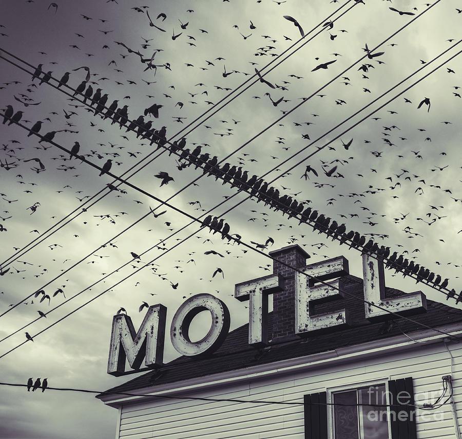 The Bird Motel Photograph by Shaunl