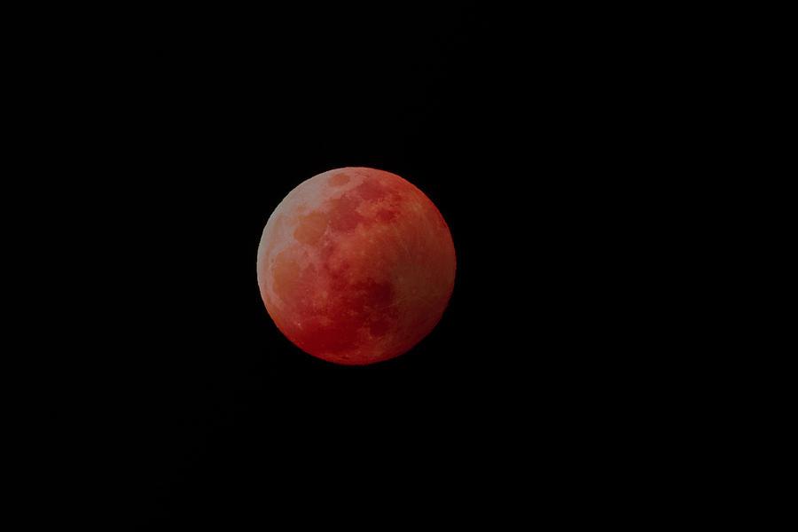 The Blood Wolf Moon by Don Hoekwater Photography