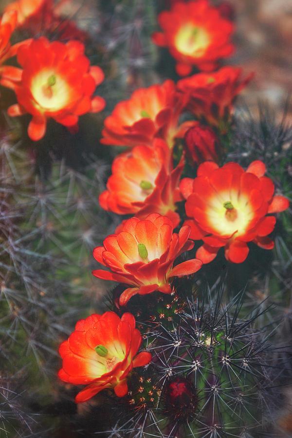 The Blooming Desert  by Saija Lehtonen