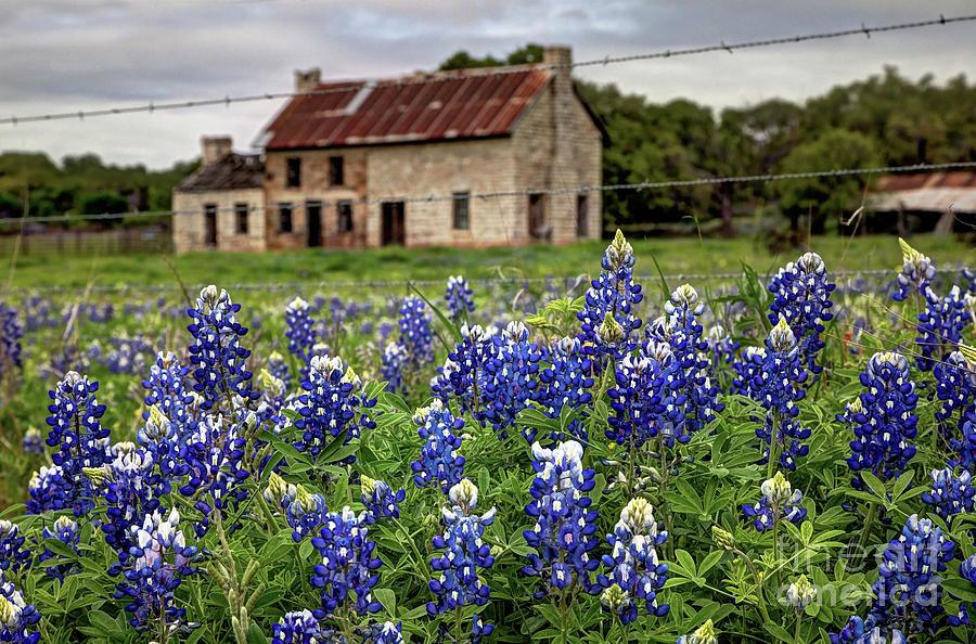 The Bluebonnet House Photograph