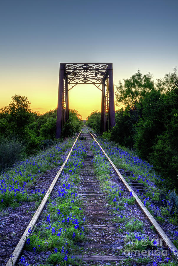 The Bluebonnet Railroad by Paul Quinn