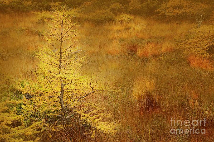 The Bog by Scott Kemper