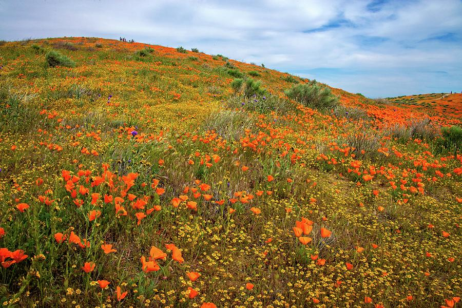 The Bold and the Beautiful - Superbloom 2019 by Lynn Bauer