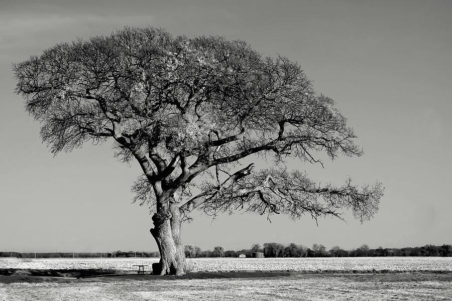 The Break Tree Photograph