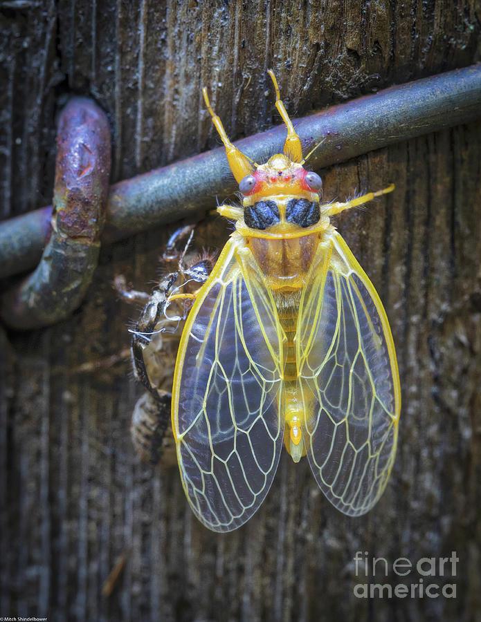 The Bug by Mitch Shindelbower