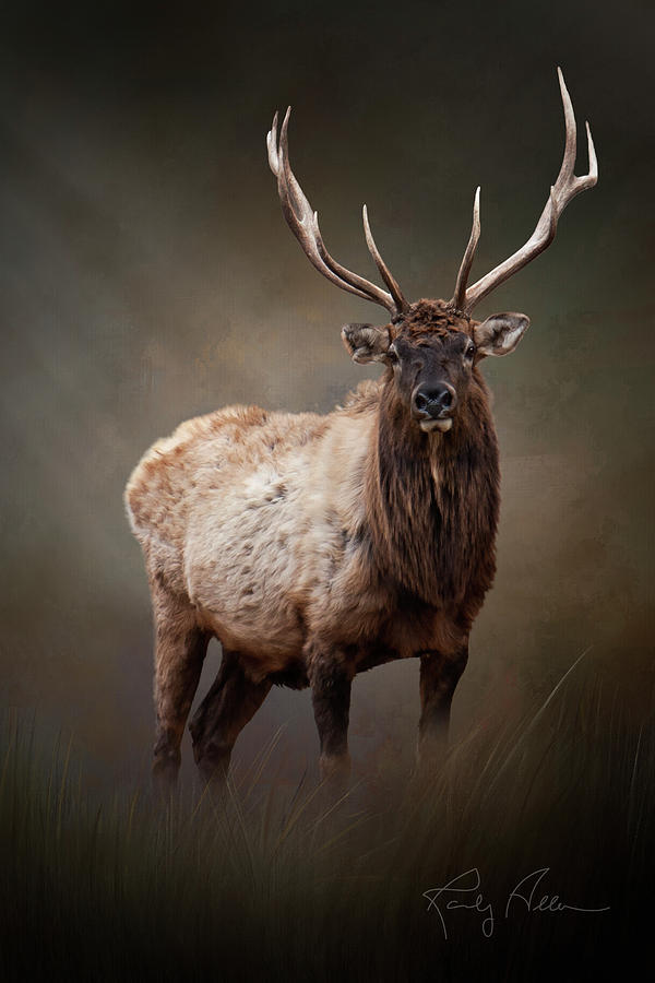 The Bull Elk by Randall Allen