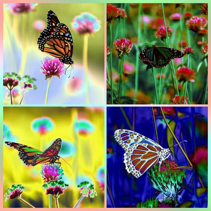 The Butterfly Collection 1. Photograph