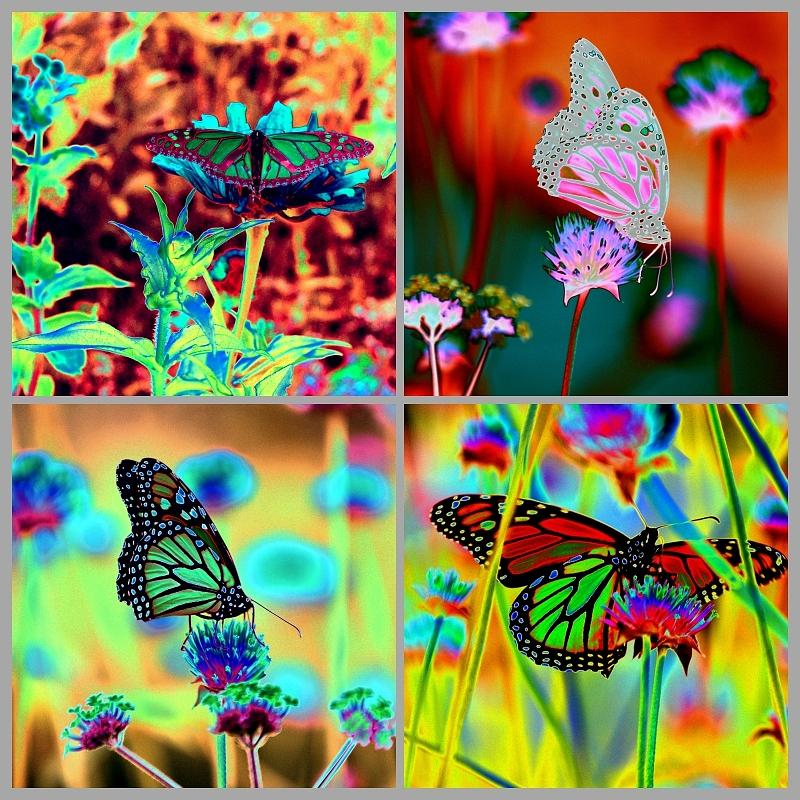 THE BUTTERFLY COLLECTION 2 by Tom Kelly