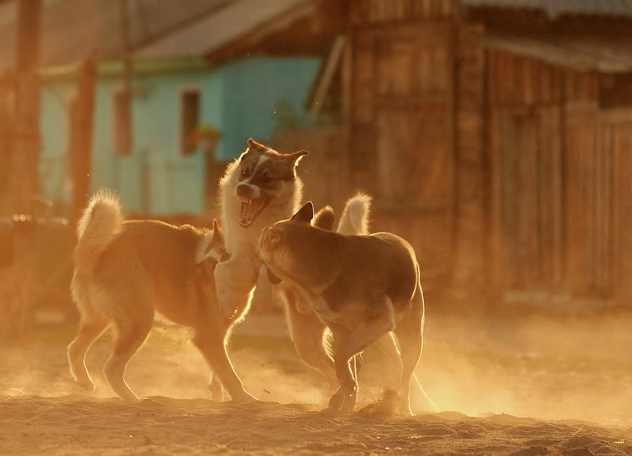 Dogs Photograph - The Call Of The Wild by Fproject - Przemyslaw