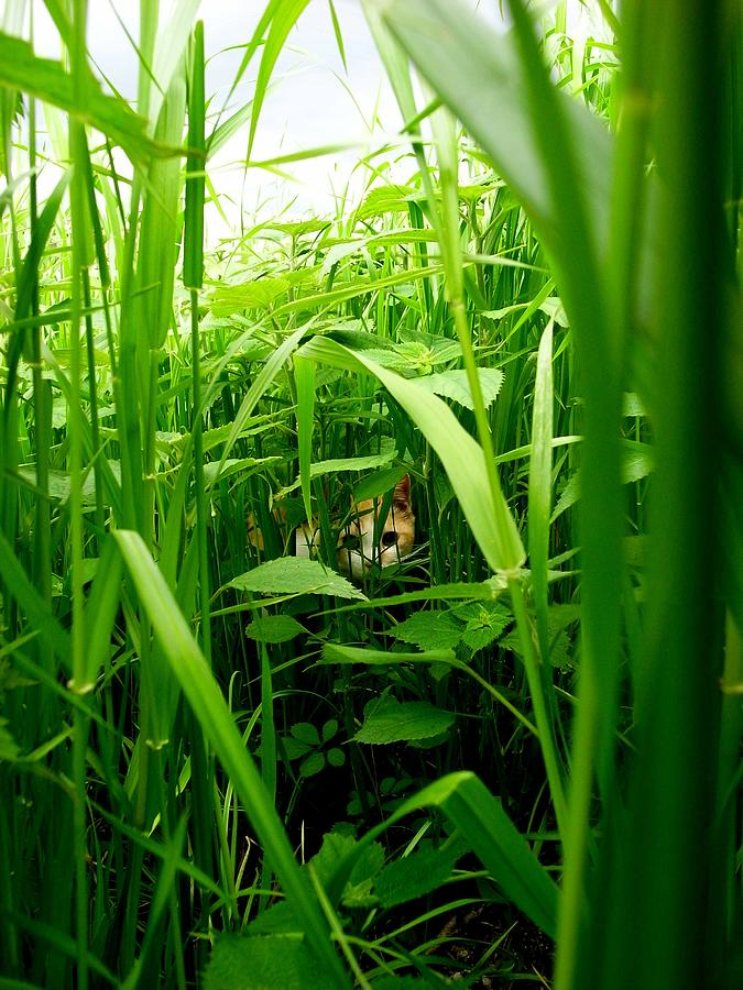 The Cat In A Grassy Place Photograph by Photographer, Loves Art, Lives In Kyoto
