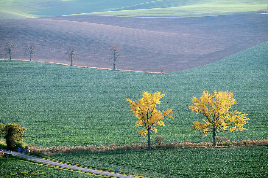 The Chestnuts way, Moravia 15 by Dubi Roman