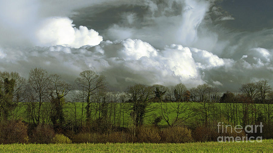 The Clouds On The Trees By Joel Douillet