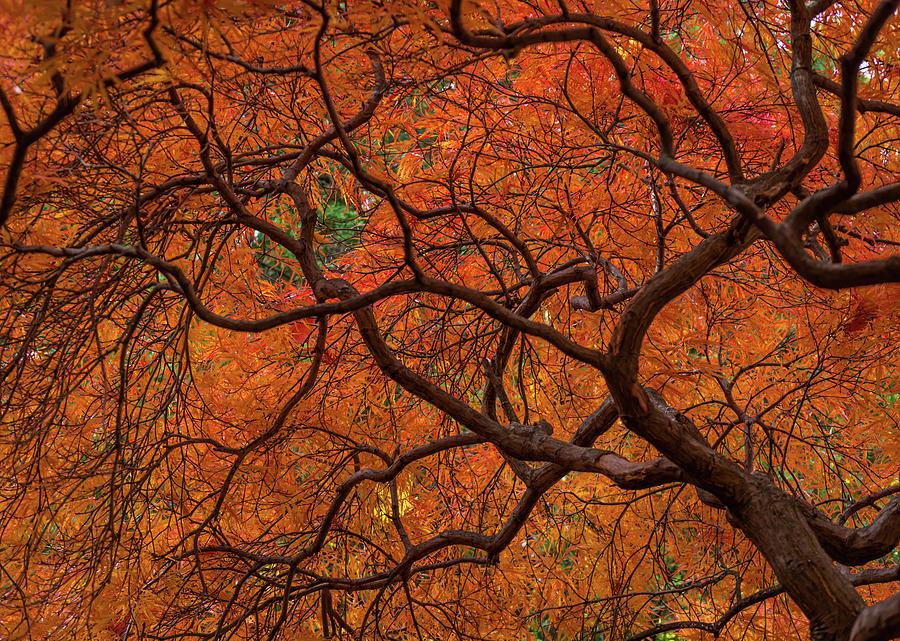 The color orange by Stewart Helberg