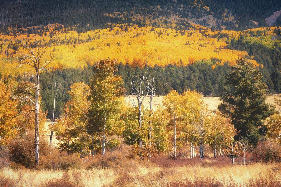 The Colors Of Autumn Aspens On The Peaks  by Saija Lehtonen