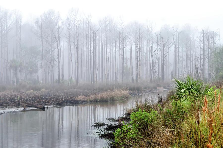 The Coming Fog by Scott Hansen