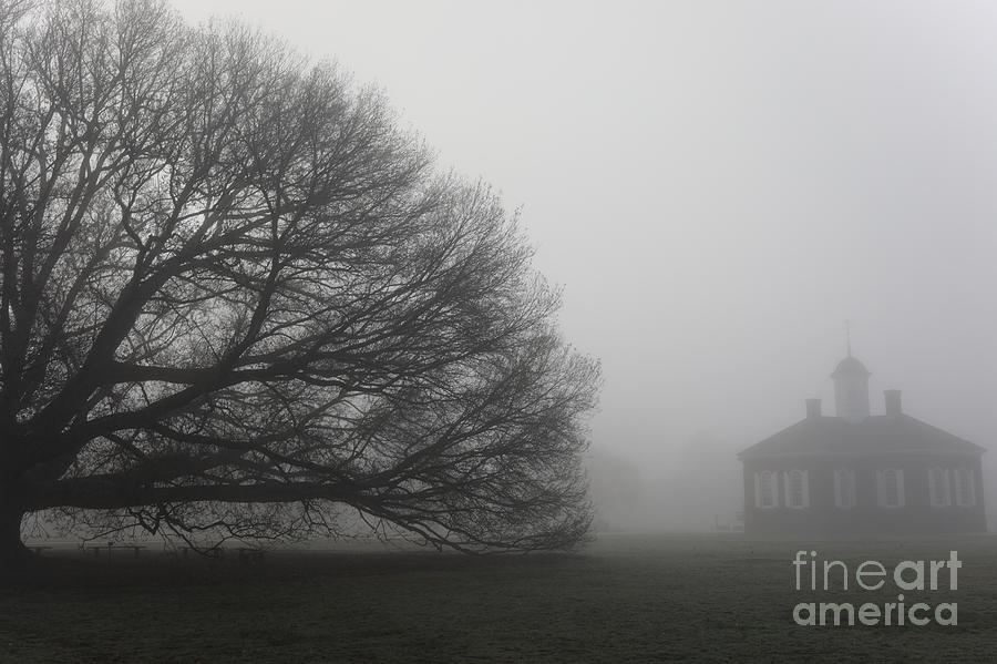 The Courthouse and the Oak by Rachel Morrison