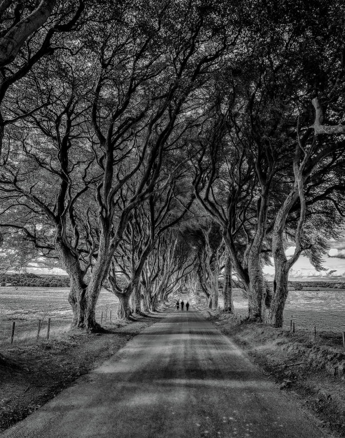 The Dark Hedges by Chris Cousins