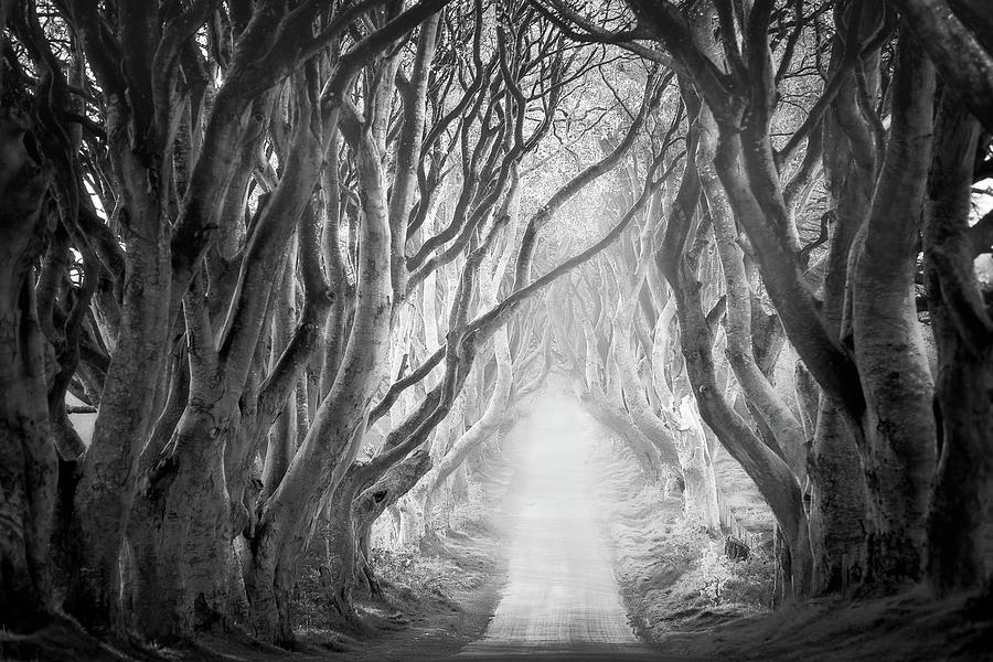 The Dark Hedges in black and white by Roelof Nijholt