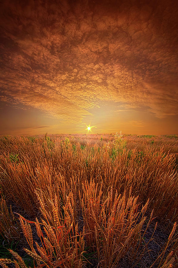 The Day Begins Here by Phil Koch